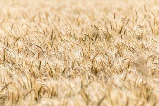 Dotacje dla rolników