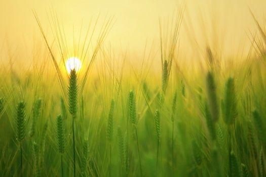 Projekt nowej ustawy dotyczącej ochrony rolników